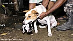 حمله وحشتناک چند مار کبرا به این خانه روستایی و کشتن چندین سگ اهلی بیچاره HD