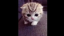 بچه حیوانات سوپر بامزه و خنده دار - قسمت 11 - Cute Baby Animals