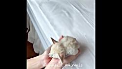 بچه حیوانات سوپر بامزه و خنده دار - قسمت 13 - Cute Baby Animals