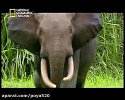 مستند حیوانات