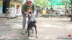 نجات حیوانات از مرگ - ام...