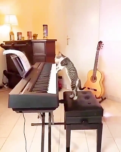 گربه هنرمند