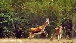 مستند شکار/the hunt