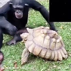 کلیب محبت حیوانات بایک...