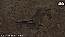 مستند زیبای حیات وحش قسمت (11)