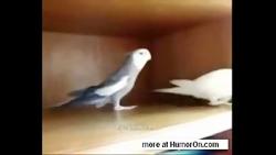 mybirds_ir