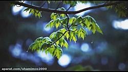 بهار بارونی