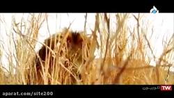 فیلم طعمه | فیلم اکشن | سینمایی | دوبله فارسی