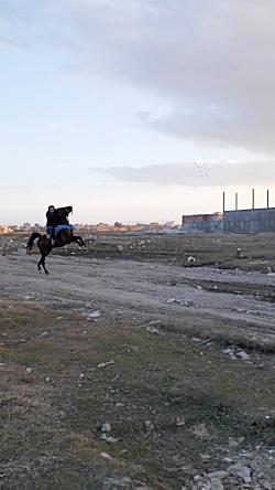 اسب کرد باجلان