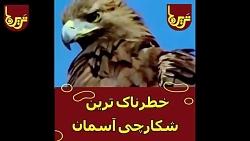لحظه حمله عقاب به حیوانات و انسان