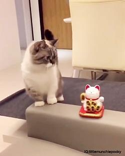 گربه بازیگوش و زیبا