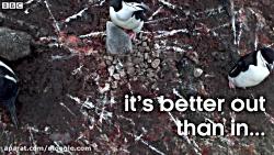 تصوراتی که درباره پنگوئن داشتید با دیدن این فیلم از بین میره