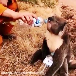 آتش سوزی در استرالیا و کمک به حیوانات