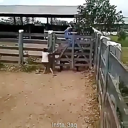 عاقبت رام کردن اسب چموش