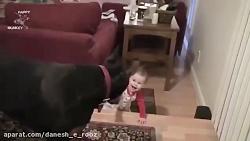 بازی و مراقبت دوبرمن از کودکان