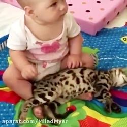 بازی بچه با گربه