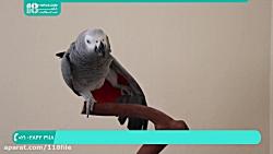 آموزش تربیت طوطی | ابزار تربیت طوطی | 28423118-021