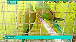 آموزش تربیت طوطی   آموزش به طوطی   28423118-021
