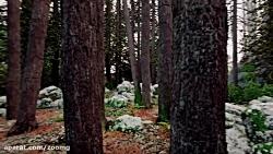 طراحی واقعگرایانه محیط جنگل در بازی Dreams - بخش دوم
