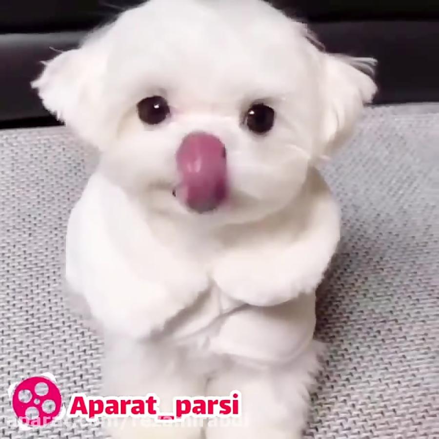 چشاشو نگا...سگ بامزه