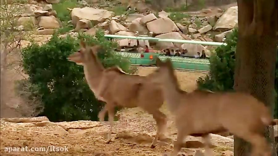 دیدنی های حیات وحش #1