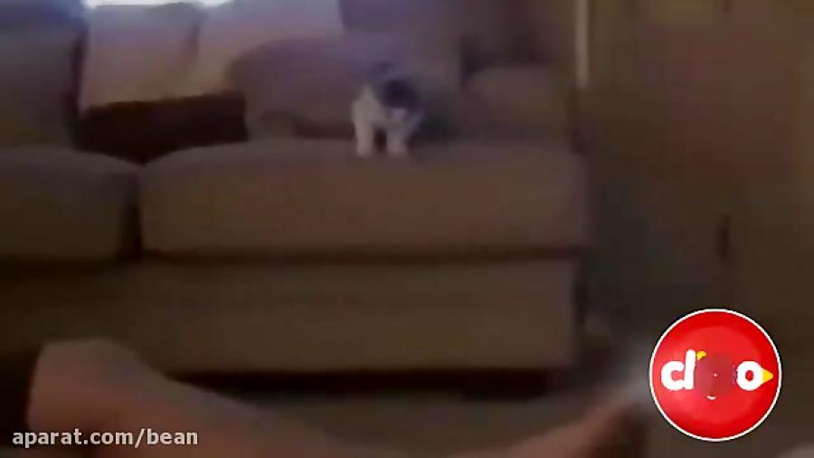 بامزه ترین لحظات گربه ای (قسمت اول)