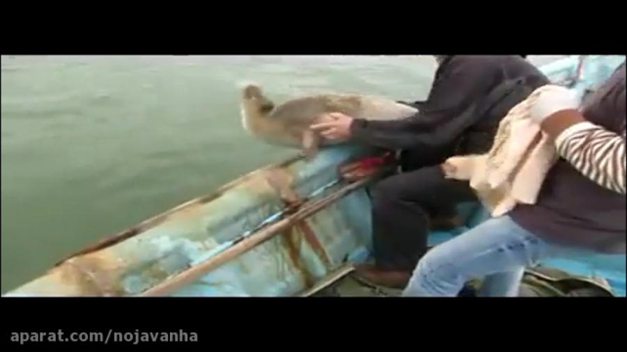 فک خزری تنها گونه پستاندار دریای خزر
