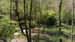 قدم زدن در جنگل های مازندران در فصل بهار