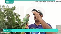 آموزش تربیت طوطی   آموزش به طوطی برای حرف زدن