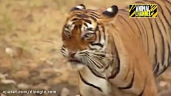 چندمورد از خطرناک ترین حیوانات جهان