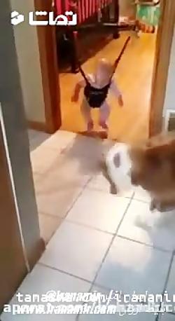این سگ داره تلاش میکنه به کودک یاد بده چطوری پاش رو به زمین بزنه