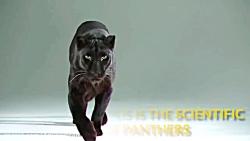 مستند جذاب و علمی، 8 تا از زیباترین گربه سانان سیاره زمین