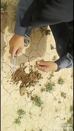 روش پیدا کردن قارچ