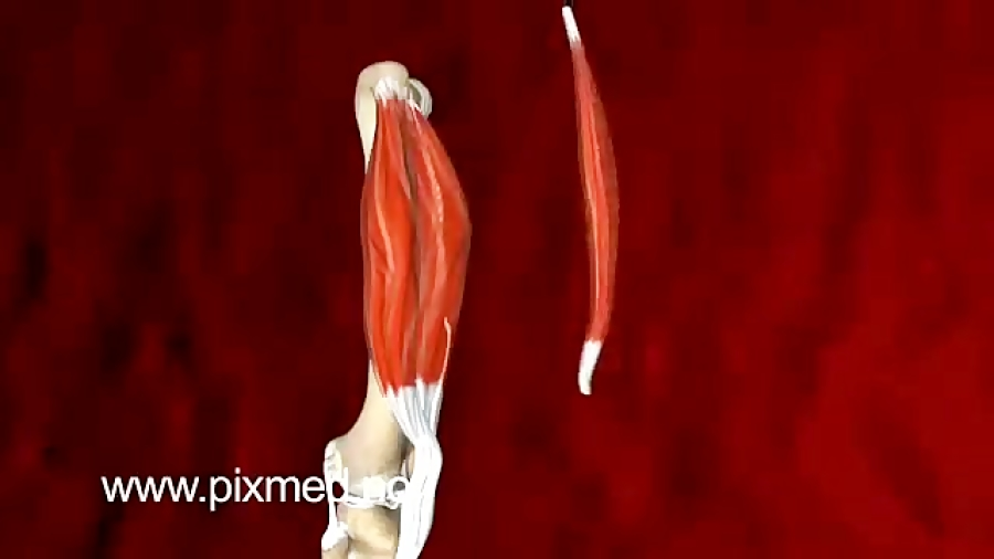 ساختار-و-عملکرد-مفصل-زانو