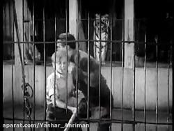 فیلم واقعی نبرد ببر با شیر در قفس