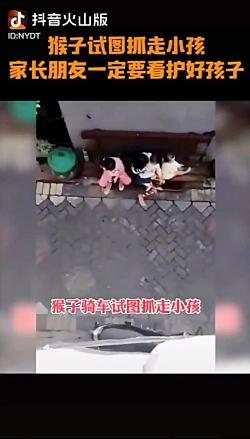 میمون و دزدیدن دختر بجه
