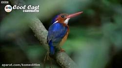 میلیونها سال تلاش برای بقای نسل این پرنده زیبا