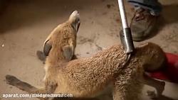لحظاتی زیبا از نجات حیوانات