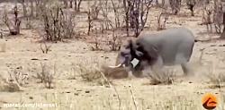 فیل گاو