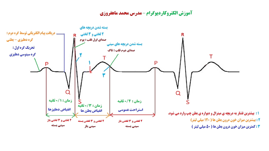 آموزش الکتروکاردیوگرام مدرس محمد ماهفروزی