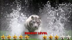 مستند حیات وحش نبرد شیر...