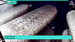 رپرورش قارچ | آموزش پرورش قارچ درمنزل | پرورش قارچ دکمه ای 02128423118