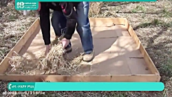 آموزش پرورش قارچ درمنزل | پرورش قارچ (پرورش قارچ در فضا باز)