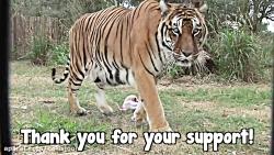 باغ وحش حیوانات وحشی
