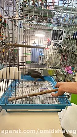 دامپزشکی معتبر پرندگان زینتی مرکز تحقیقات طوطی سانان رفتارشناسی