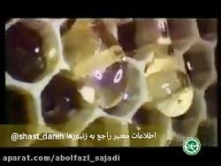 اسرار کندو زنبور عسل