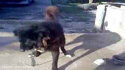 سگ قهدریجانی آدمخوار فالو فراموش نشه لطفا!