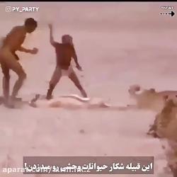 این قبیله شکار حیوانات وحشی را می دزدند