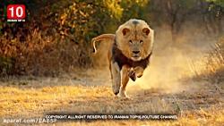 10تا از خطرناک ترین حیوانات دنیا