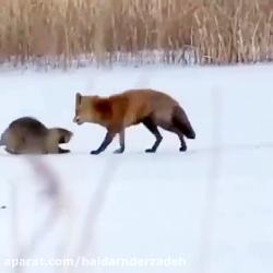 حیوانات برفی